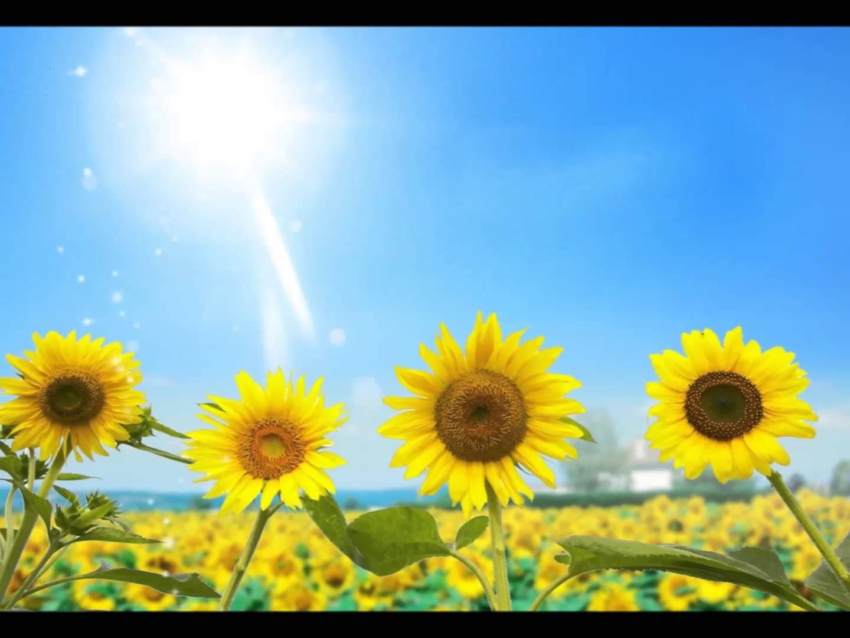 b8d323f3c Uma canção que venha nos trazer Sol de Primavera - Conexão Boas Notícias