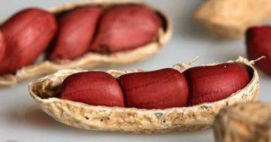 Produtores da região de Itabaiana ganham unidade para produção integrada de amendoim