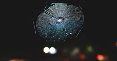 Cientistas traduziram teias de aranha em música, e é muito mais impressionante