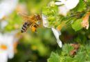 Brasileiras criam técnica segura para detectar agrotóxicos em abelhas